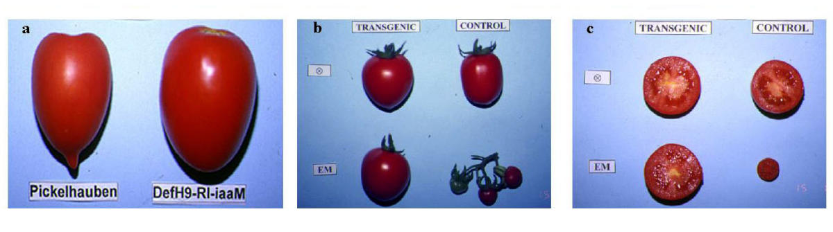 https://static-content.springer.com/image/art%3A10.1186%2F1472-6750-2-1/MediaObjects/12896_2001_Article_14_Fig1_HTML.jpg