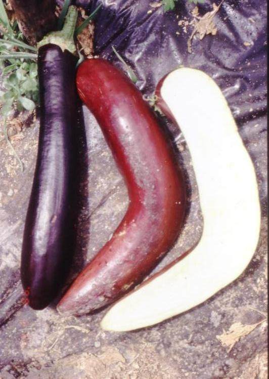 https://static-content.springer.com/image/art%3A10.1186%2F1472-6750-2-4/MediaObjects/12896_2001_Article_17_Fig1_HTML.jpg