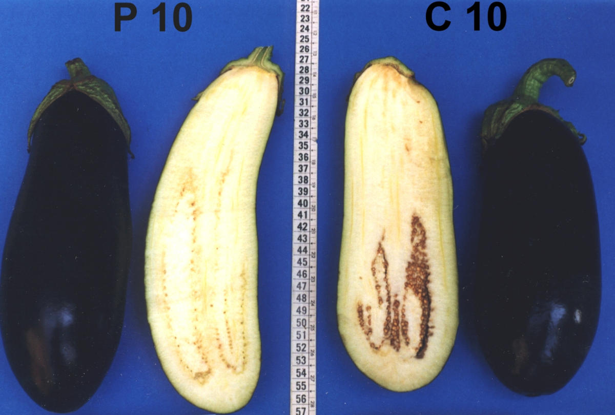 https://static-content.springer.com/image/art%3A10.1186%2F1472-6750-2-4/MediaObjects/12896_2001_Article_17_Fig2_HTML.jpg