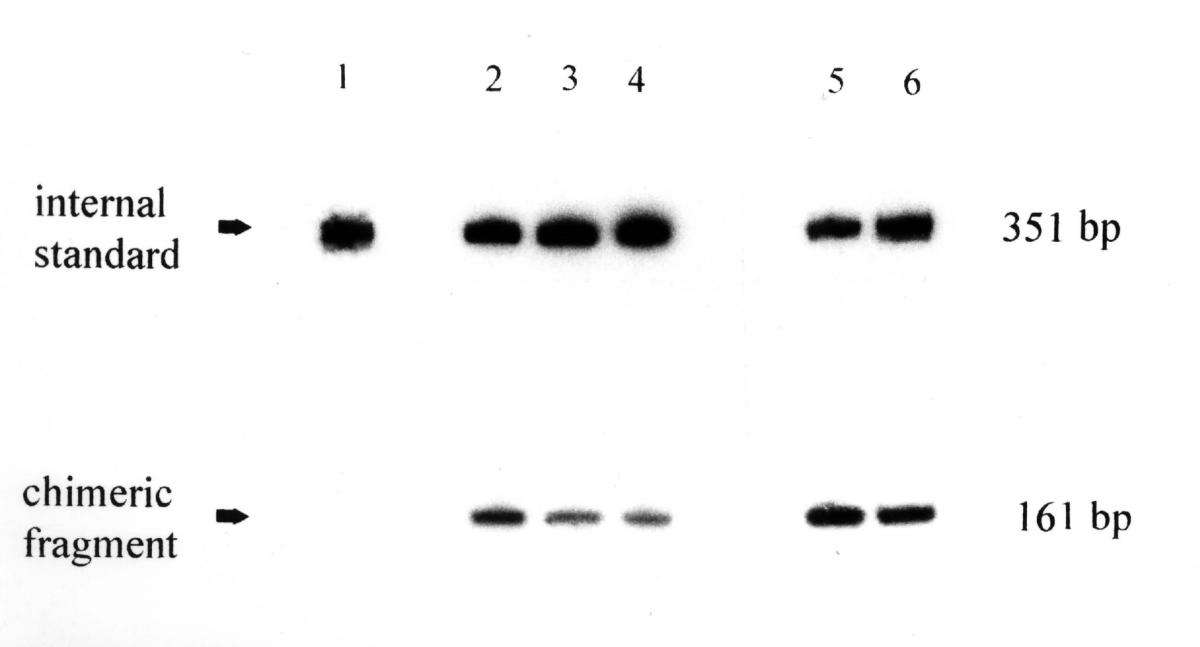 https://static-content.springer.com/image/art%3A10.1186%2F1472-6750-2-4/MediaObjects/12896_2001_Article_17_Fig3_HTML.jpg