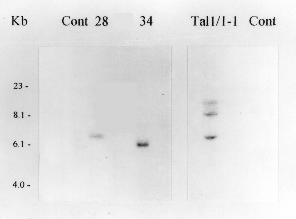 https://static-content.springer.com/image/art%3A10.1186%2F1472-6750-2-4/MediaObjects/12896_2001_Article_17_Fig4_HTML.jpg