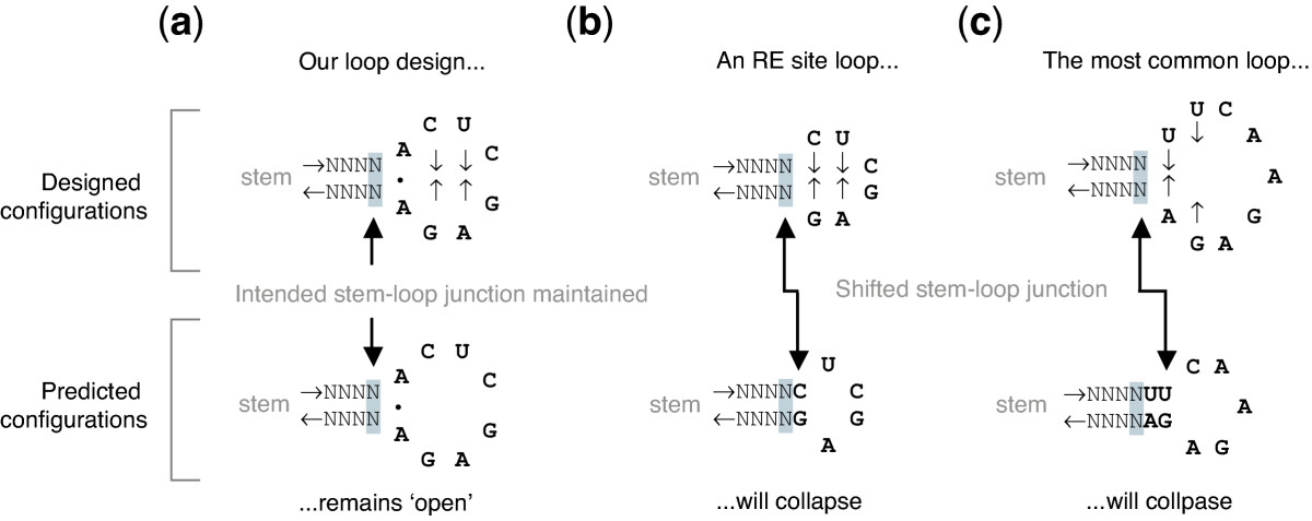 https://static-content.springer.com/image/art%3A10.1186%2F1472-6750-6-1/MediaObjects/12896_2005_Article_124_Fig4_HTML.jpg
