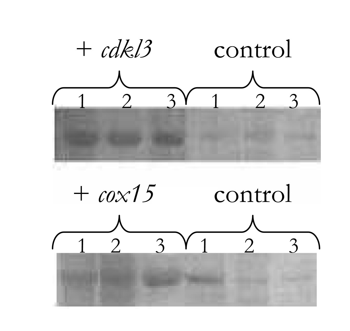 https://static-content.springer.com/image/art%3A10.1186%2F1472-6750-7-71/MediaObjects/12896_2007_Article_246_Fig3_HTML.jpg
