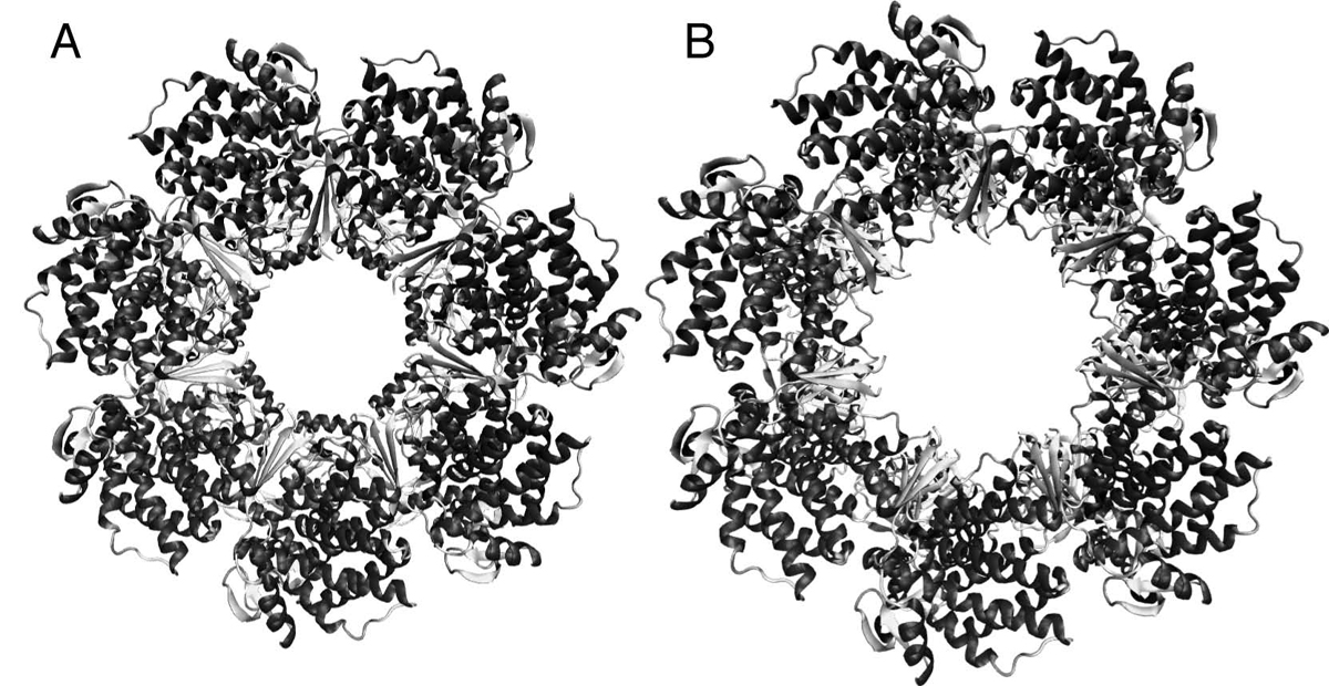 https://static-content.springer.com/image/art%3A10.1186%2F1472-6807-10-S1-S1/MediaObjects/12900_2010_Article_327_Fig1_HTML.jpg