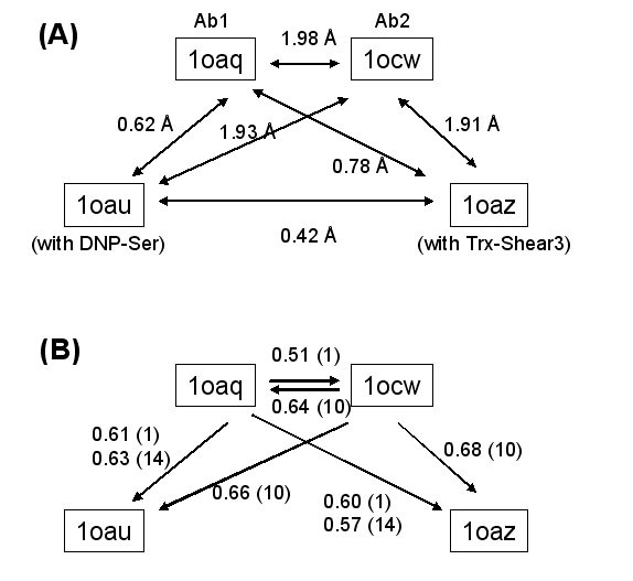 https://static-content.springer.com/image/art%3A10.1186%2F1472-6807-7-31/MediaObjects/12900_2007_Article_112_Fig7_HTML.jpg