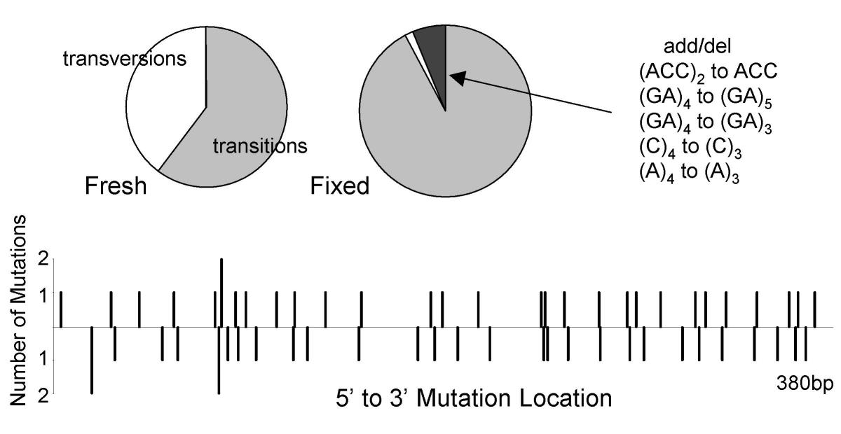 https://static-content.springer.com/image/art%3A10.1186%2F1472-6890-4-1/MediaObjects/12907_2003_Article_18_Fig3_HTML.jpg