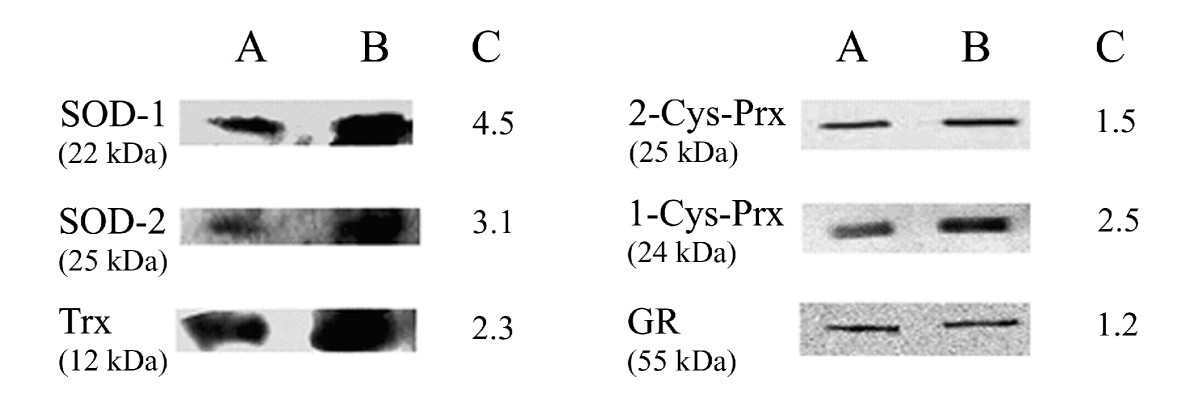 https://static-content.springer.com/image/art%3A10.1186%2F1475-2875-8-113/MediaObjects/12936_2008_Article_862_Fig5_HTML.jpg