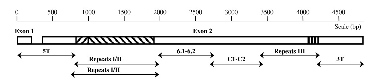 https://static-content.springer.com/image/art%3A10.1186%2F1475-2875-8-247/MediaObjects/12936_2009_Article_995_Fig1_HTML.jpg