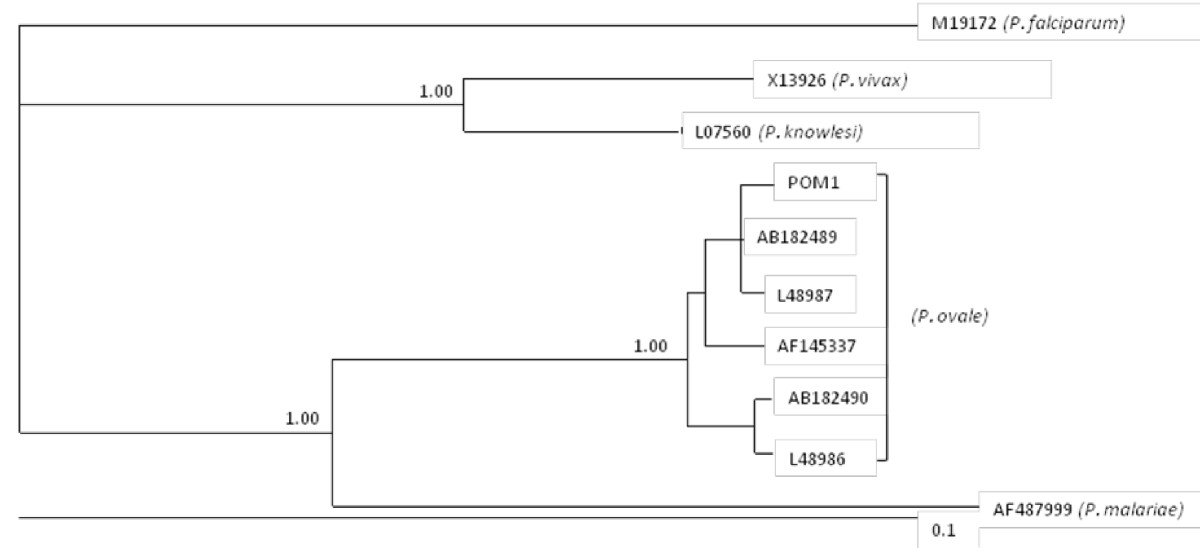 https://static-content.springer.com/image/art%3A10.1186%2F1475-2875-9-272/MediaObjects/12936_2010_Article_1354_Fig2_HTML.jpg