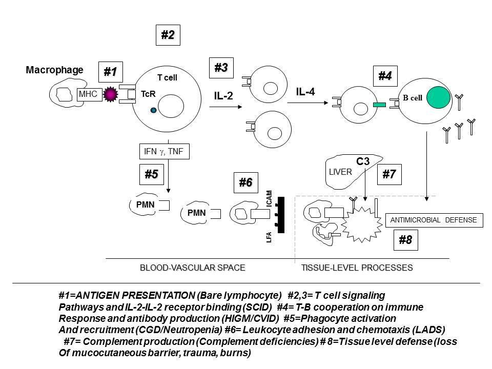 https://static-content.springer.com/image/art%3A10.1186%2F1476-7961-9-10/MediaObjects/12948_2010_Article_95_Fig2_HTML.jpg