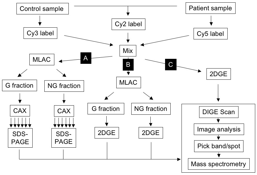 https://static-content.springer.com/image/art%3A10.1186%2F1477-5956-7-39/MediaObjects/12953_2009_Article_143_Fig1_HTML.jpg
