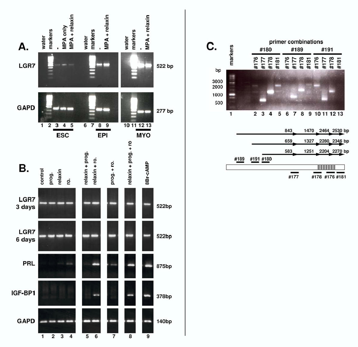 https://static-content.springer.com/image/art%3A10.1186%2F1477-7827-1-114/MediaObjects/12958_2003_Article_114_Fig4_HTML.jpg
