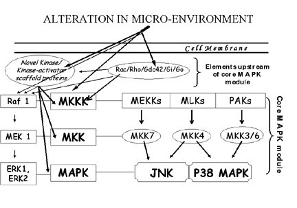 https://static-content.springer.com/image/art%3A10.1186%2F1478-811X-2-5/MediaObjects/12964_2004_Article_10_Fig1_HTML.jpg