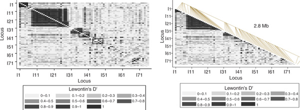 https://static-content.springer.com/image/art%3A10.1186%2F1479-7364-2-6-376/MediaObjects/40246_2005_Article_135_Fig1_HTML.jpg