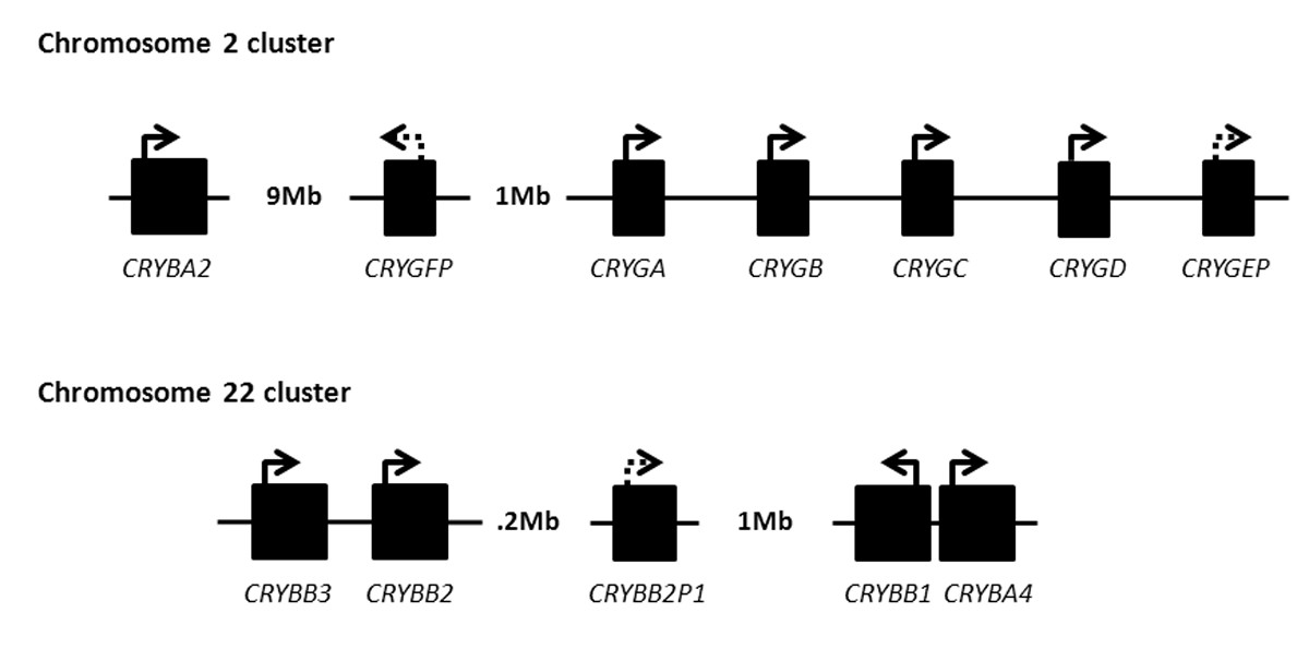 https://static-content.springer.com/image/art%3A10.1186%2F1479-7364-6-26/MediaObjects/40246_2012_Article_27_Fig4_HTML.jpg