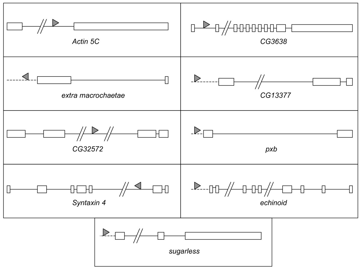 https://static-content.springer.com/image/art%3A10.1186%2F1741-7007-7-29/MediaObjects/12915_2009_Article_237_Fig4_HTML.jpg