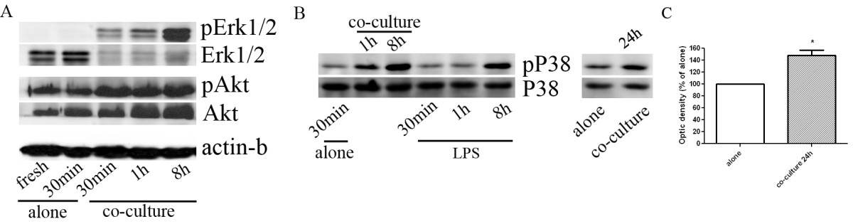 https://static-content.springer.com/image/art%3A10.1186%2F1742-2094-7-53/MediaObjects/12974_2010_Article_265_Fig8_HTML.jpg