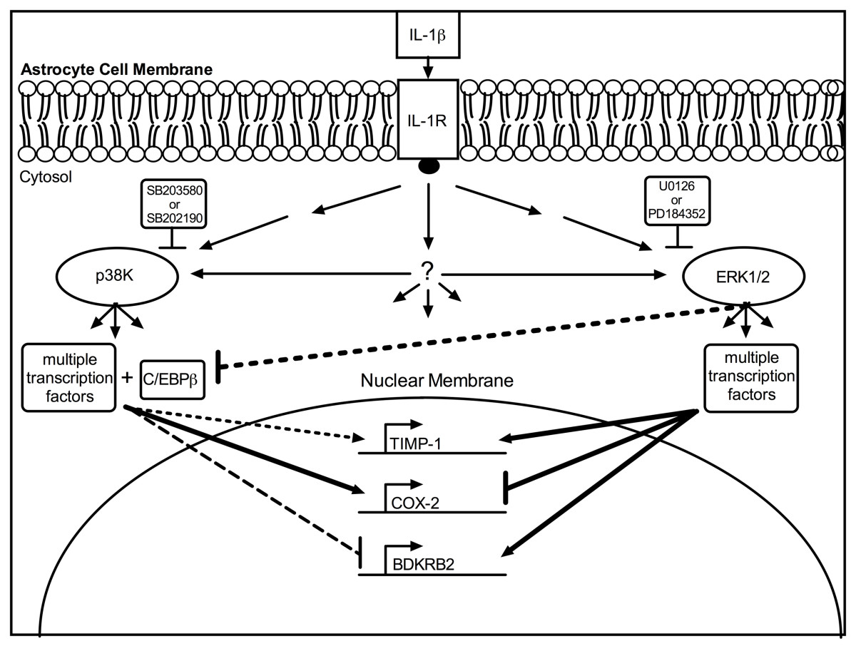 https://static-content.springer.com/image/art%3A10.1186%2F1742-2094-9-177/MediaObjects/12974_2012_Article_597_Fig7_HTML.jpg