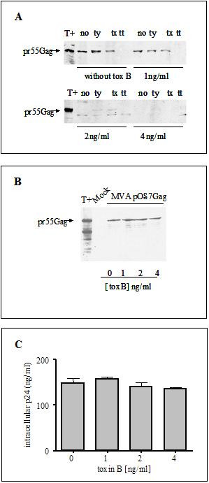 https://static-content.springer.com/image/art%3A10.1186%2F1742-4690-2-48/MediaObjects/12977_2005_Article_94_Fig1_HTML.jpg