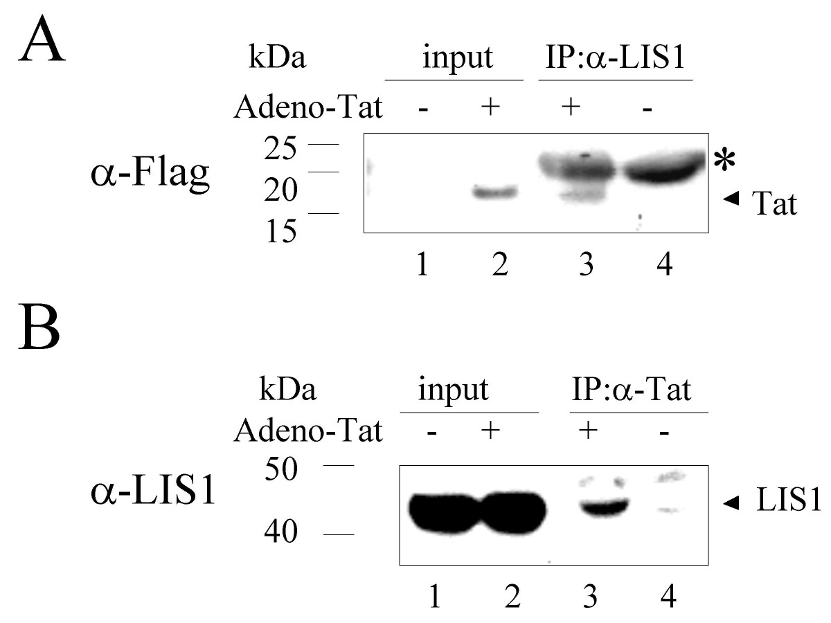 https://static-content.springer.com/image/art%3A10.1186%2F1742-4690-2-6/MediaObjects/12977_2004_Article_52_Fig6_HTML.jpg
