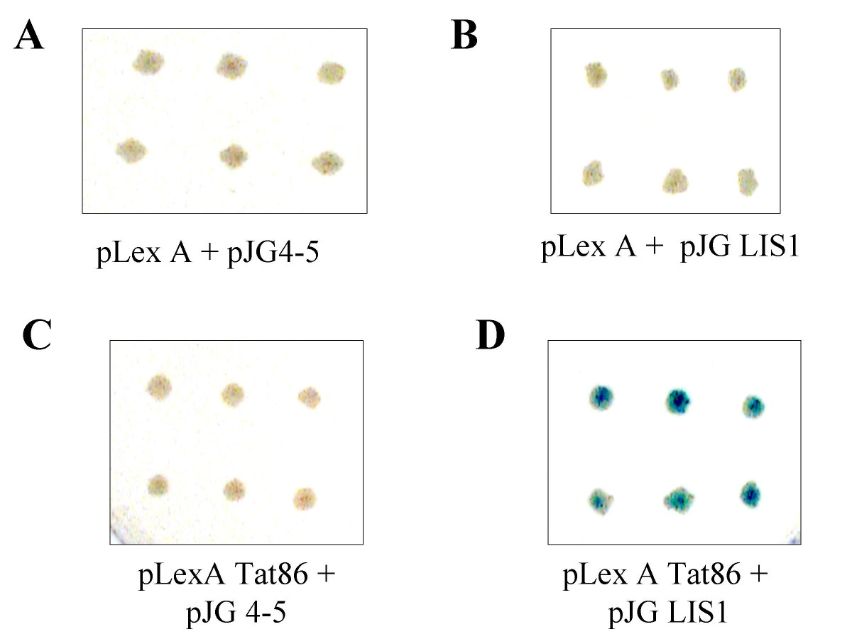 https://static-content.springer.com/image/art%3A10.1186%2F1742-4690-2-6/MediaObjects/12977_2004_Article_52_Fig7_HTML.jpg