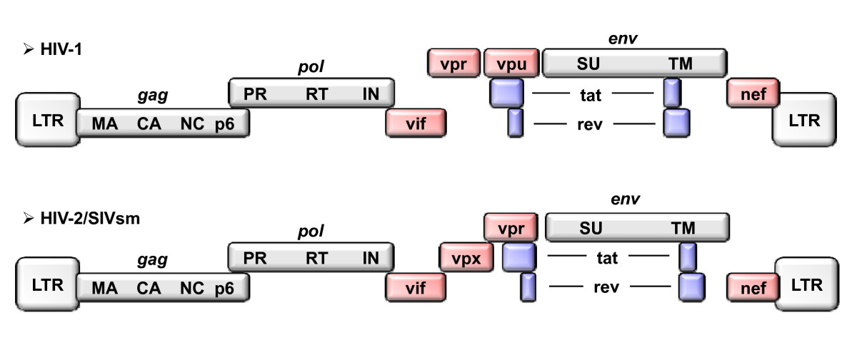 https://static-content.springer.com/image/art%3A10.1186%2F1742-4690-7-35/MediaObjects/12977_2009_Article_1838_Fig1_HTML.jpg