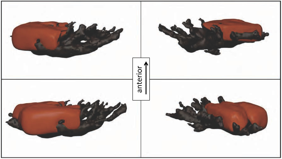 https://static-content.springer.com/image/art%3A10.1186%2F1742-9994-11-1/MediaObjects/12983_2013_Article_295_Fig8_HTML.jpg