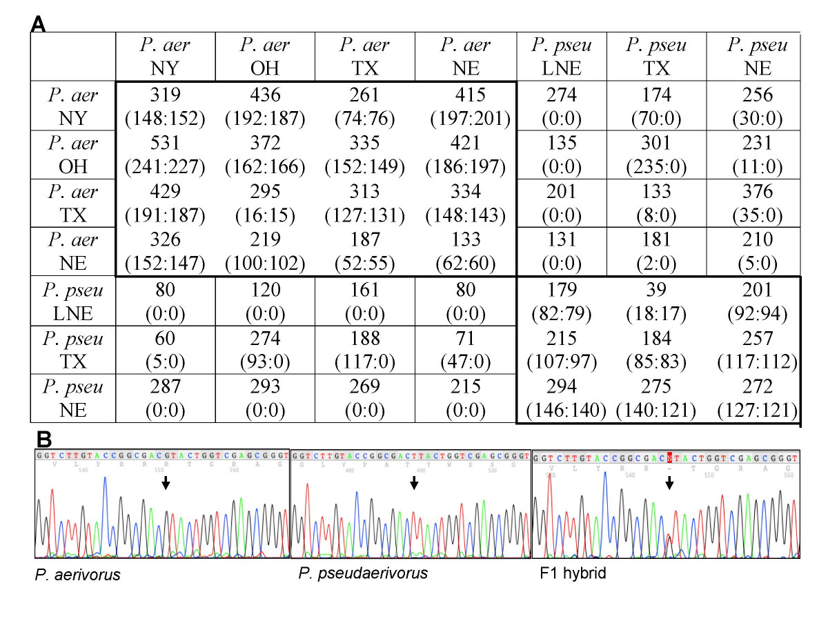 https://static-content.springer.com/image/art%3A10.1186%2F1742-9994-3-14/MediaObjects/12983_2006_Article_36_Fig6_HTML.jpg