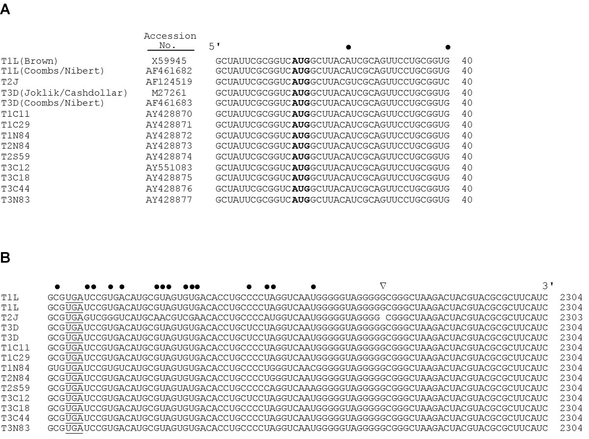 https://static-content.springer.com/image/art%3A10.1186%2F1743-422X-1-6/MediaObjects/12985_2004_Article_6_Fig1_HTML.jpg