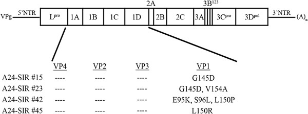 https://static-content.springer.com/image/art%3A10.1186%2F1743-422X-10-2/MediaObjects/12985_2012_Article_1978_Fig4_HTML.jpg