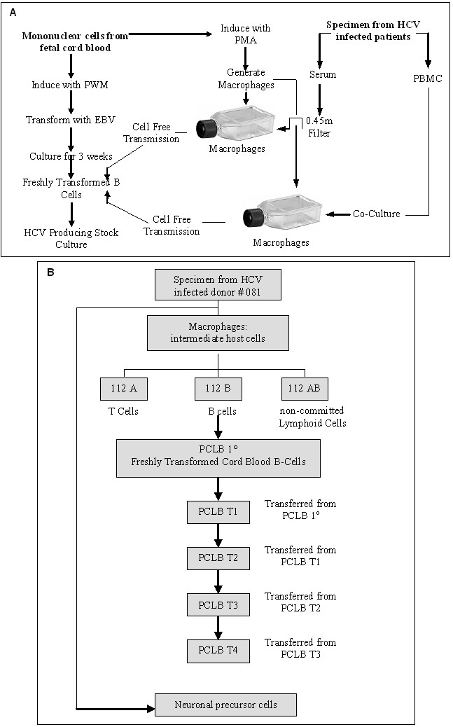 https://static-content.springer.com/image/art%3A10.1186%2F1743-422X-2-37/MediaObjects/12985_2005_Article_52_Fig1_HTML.jpg
