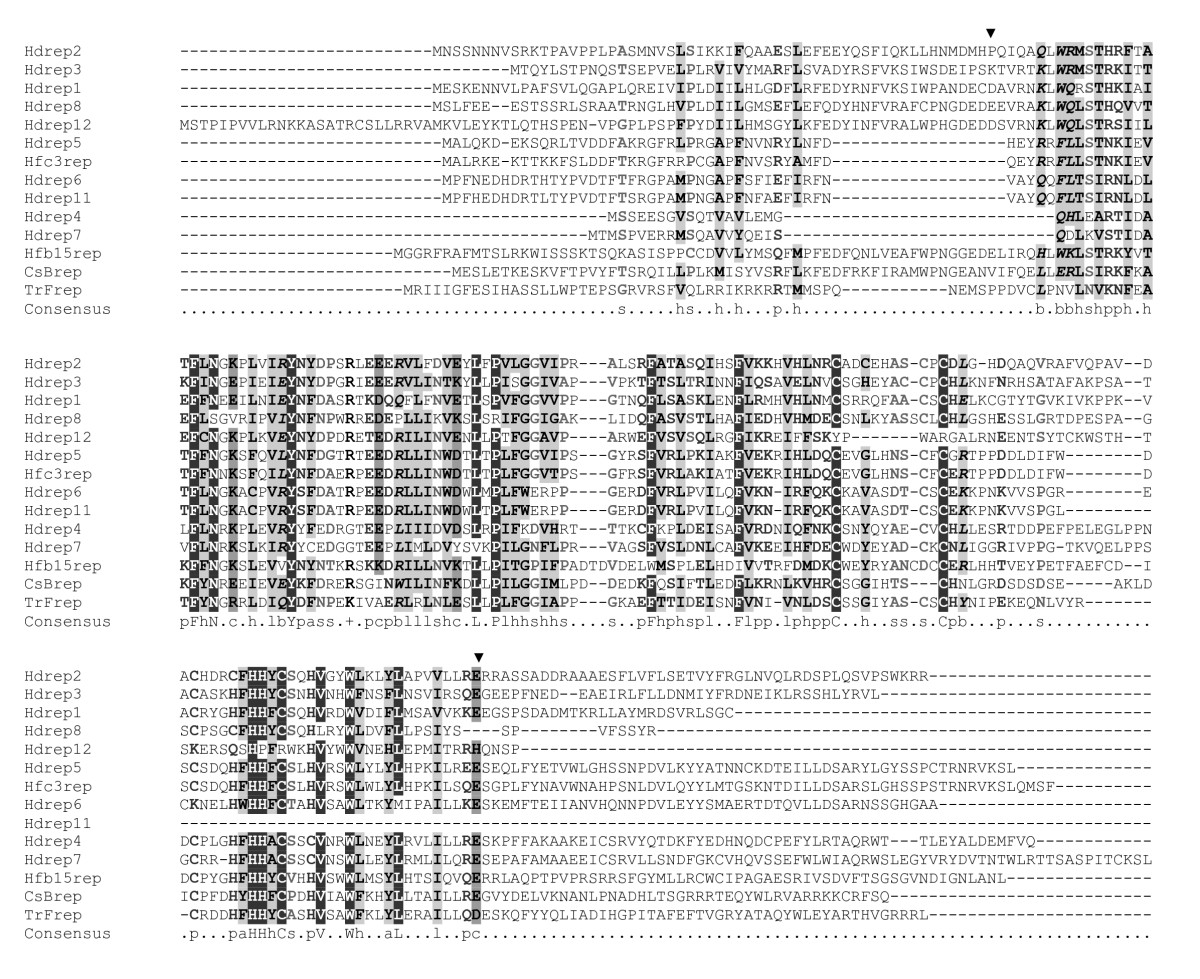 https://static-content.springer.com/image/art%3A10.1186%2F1743-422X-3-48/MediaObjects/12985_2006_Article_155_Fig2_HTML.jpg