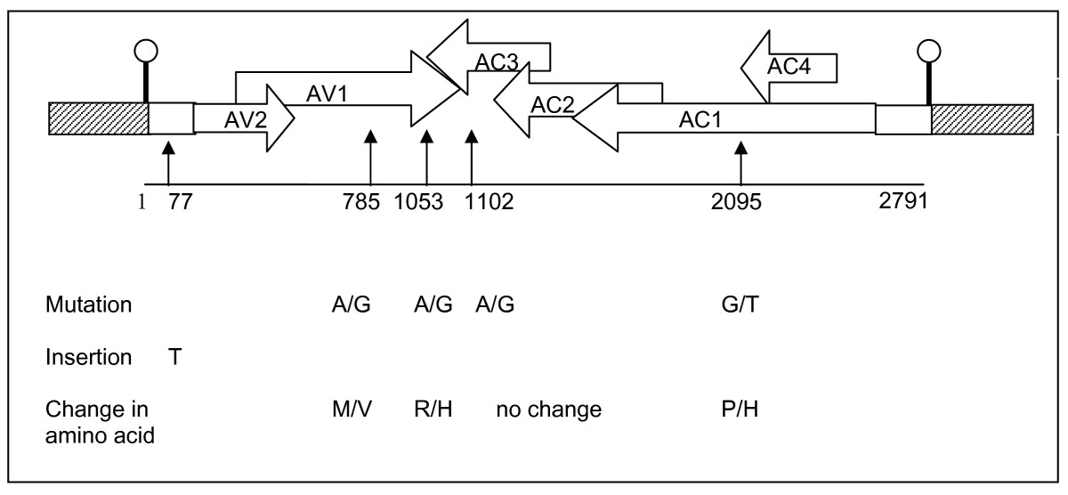https://static-content.springer.com/image/art%3A10.1186%2F1743-422X-5-135/MediaObjects/12985_2008_Article_484_Fig1_HTML.jpg
