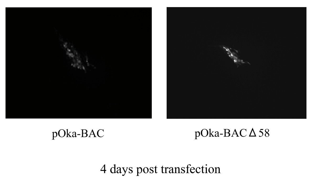 https://static-content.springer.com/image/art%3A10.1186%2F1743-422X-5-54/MediaObjects/12985_2008_Article_403_Fig3_HTML.jpg