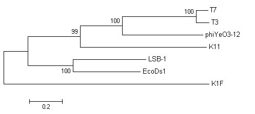 https://static-content.springer.com/image/art%3A10.1186%2F1743-422X-7-255/MediaObjects/12985_2010_Article_1000_Fig8_HTML.jpg
