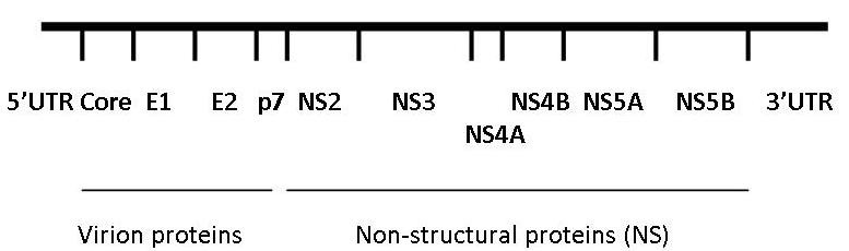 https://static-content.springer.com/image/art%3A10.1186%2F1743-422X-8-346/MediaObjects/12985_2011_Article_1438_Fig1_HTML.jpg