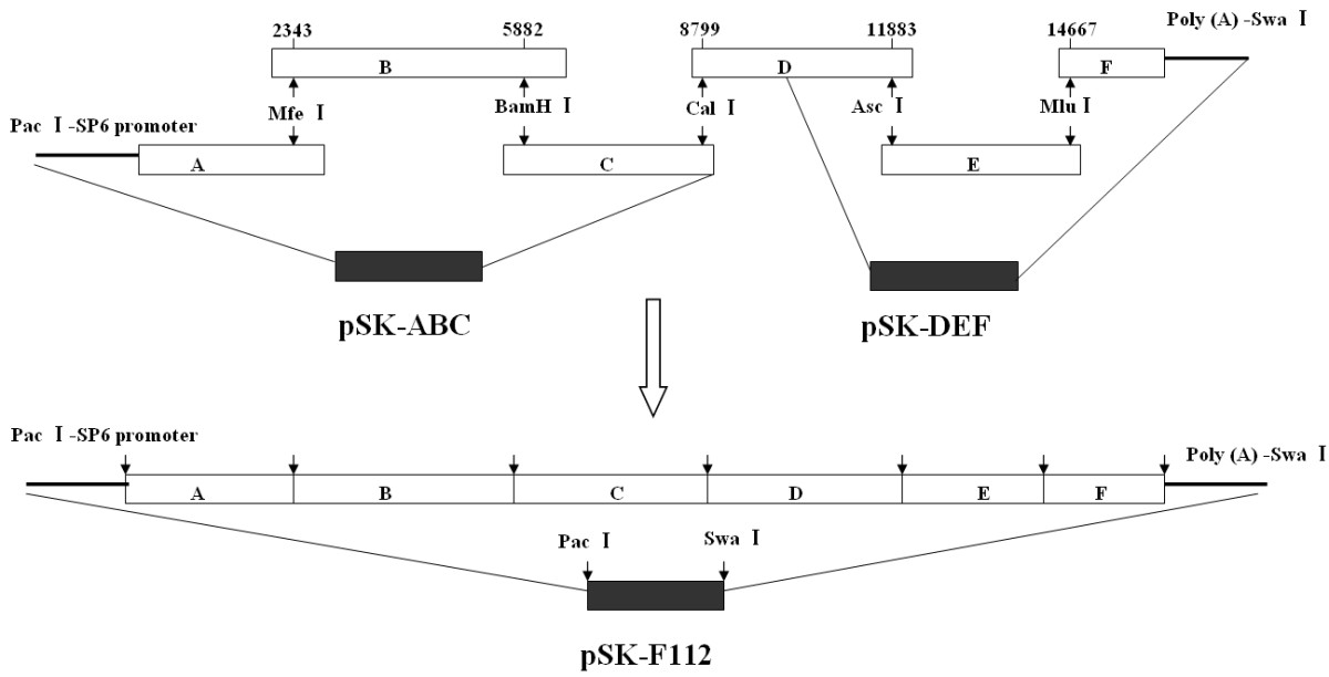 https://static-content.springer.com/image/art%3A10.1186%2F1743-422X-9-141/MediaObjects/12985_2011_Article_1779_Fig1_HTML.jpg
