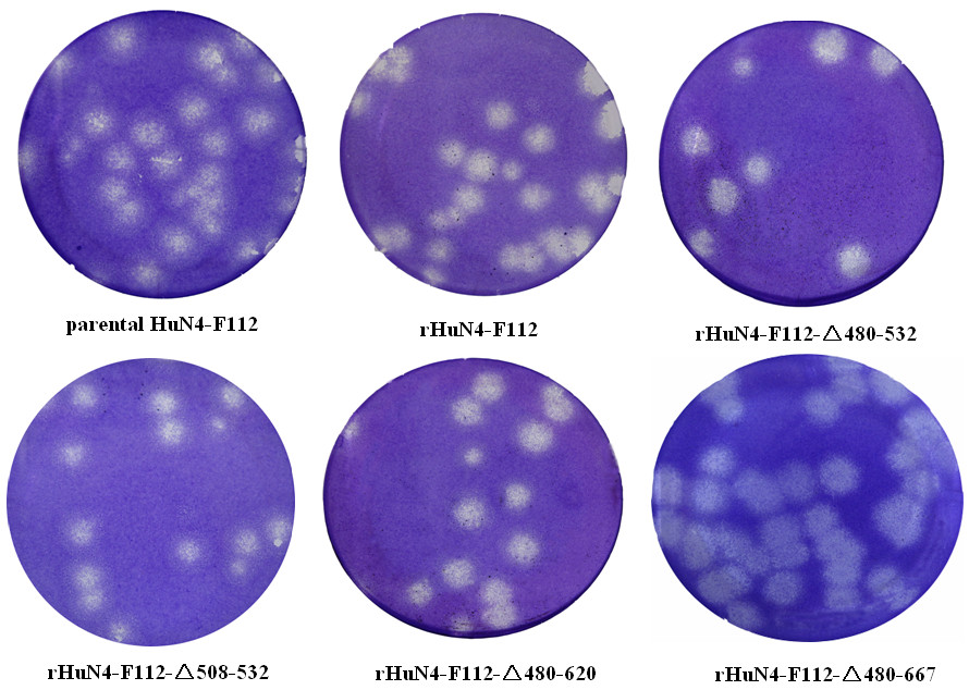 https://static-content.springer.com/image/art%3A10.1186%2F1743-422X-9-141/MediaObjects/12985_2011_Article_1779_Fig5_HTML.jpg
