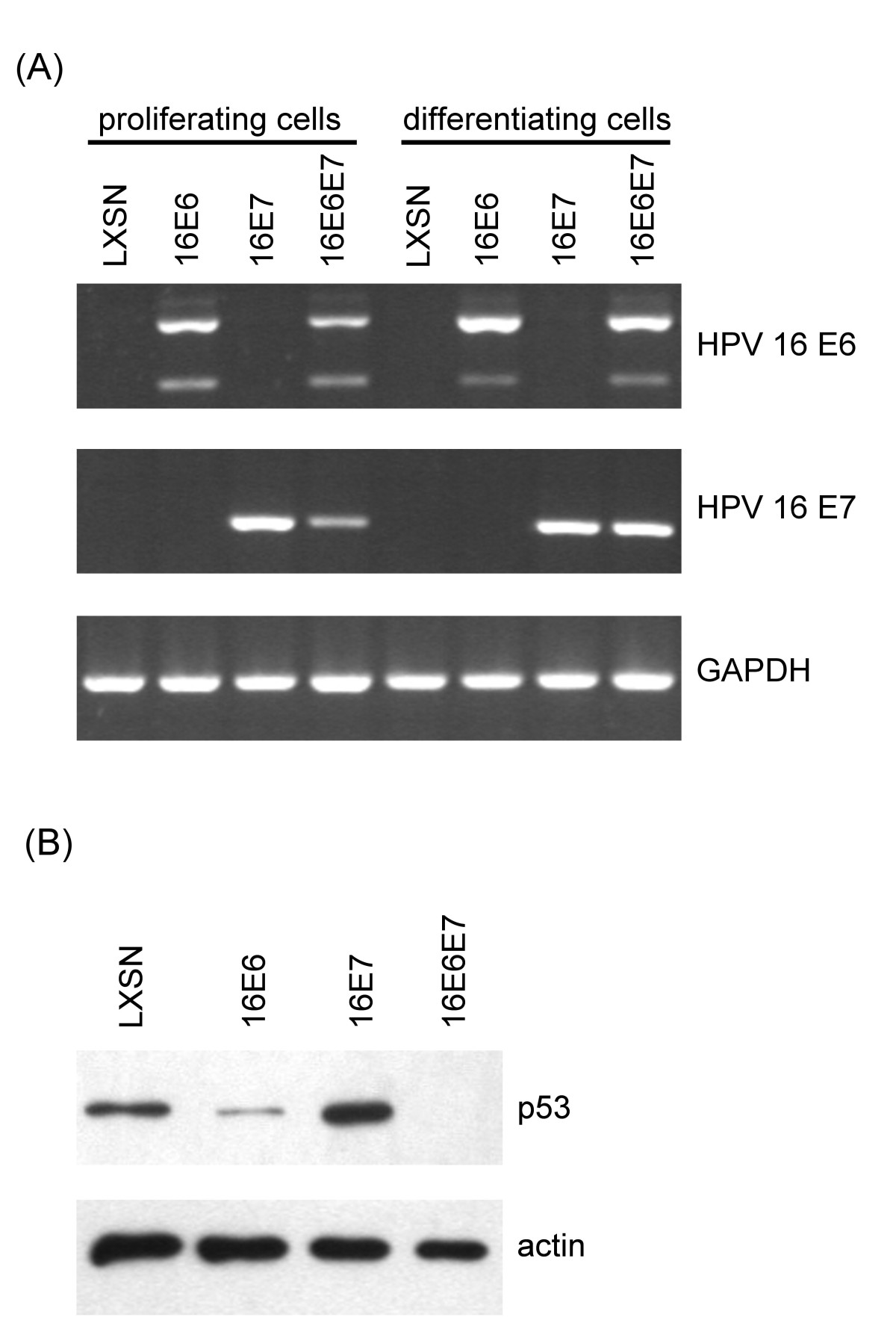 https://static-content.springer.com/image/art%3A10.1186%2F1743-422X-9-36/MediaObjects/12985_2011_Article_1701_Fig1_HTML.jpg