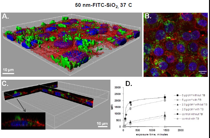 https://static-content.springer.com/image/art%3A10.1186%2F1743-8977-10-2/MediaObjects/12989_2012_Article_227_Fig3_HTML.jpg