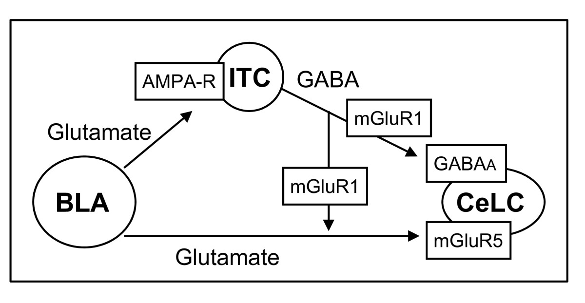 https://static-content.springer.com/image/art%3A10.1186%2F1744-8069-6-93/MediaObjects/12990_2010_Article_352_Fig11_HTML.jpg
