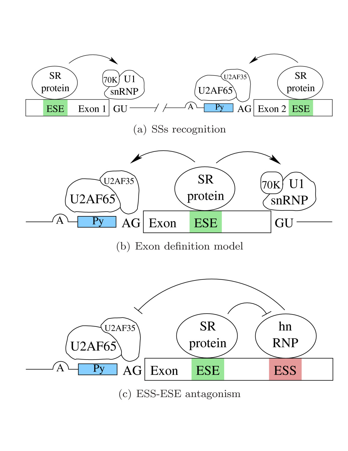 https://static-content.springer.com/image/art%3A10.1186%2F1745-6150-1-10/MediaObjects/13062_2006_Article_10_Fig2_HTML.jpg