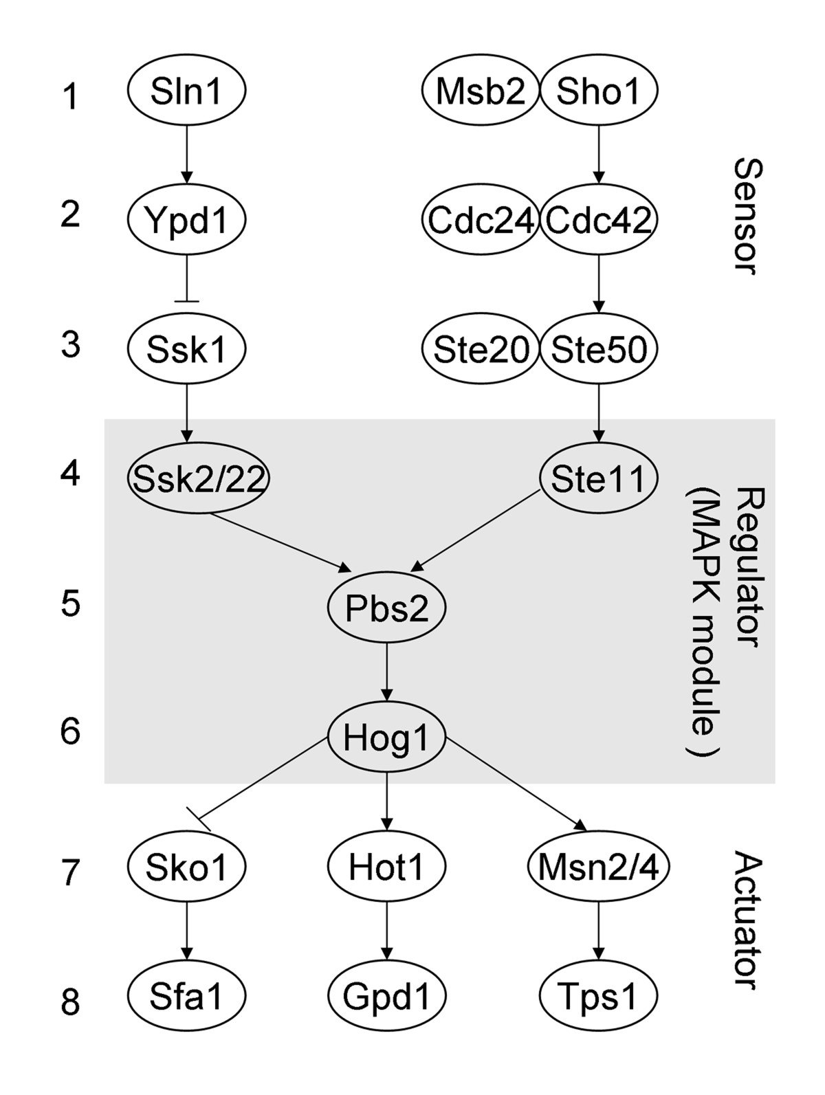 https://static-content.springer.com/image/art%3A10.1186%2F1745-6150-5-46/MediaObjects/13062_2010_Article_229_Fig1_HTML.jpg