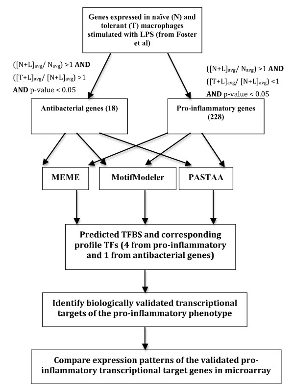 https://static-content.springer.com/image/art%3A10.1186%2F1745-7580-6-5/MediaObjects/12996_2010_Article_37_Fig1_HTML.jpg