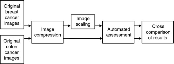 https://static-content.springer.com/image/art%3A10.1186%2F1746-1596-7-29/MediaObjects/13000_2011_Article_544_Fig1_HTML.jpg