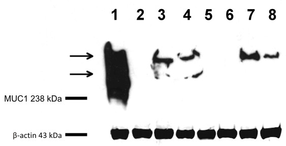 https://static-content.springer.com/image/art%3A10.1186%2F1746-6148-8-86/MediaObjects/12917_2011_Article_376_Fig3_HTML.jpg