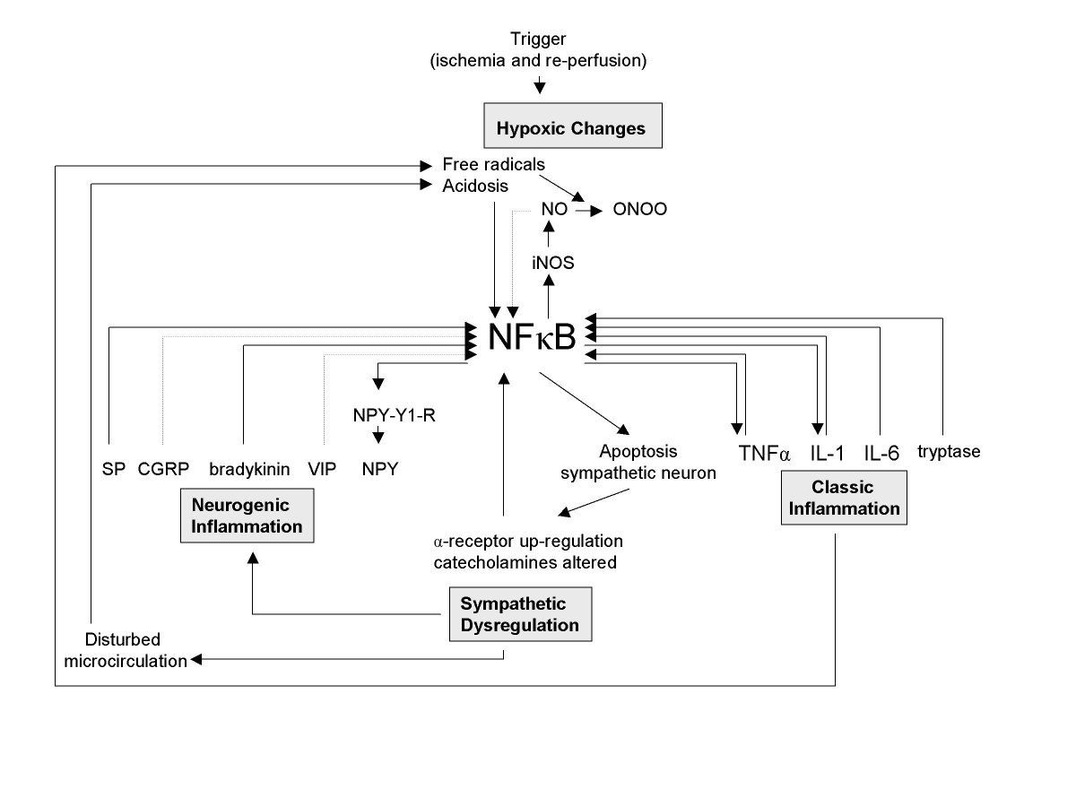https://static-content.springer.com/image/art%3A10.1186%2F1747-5333-2-2/MediaObjects/13009_2006_Article_22_Fig6_HTML.jpg
