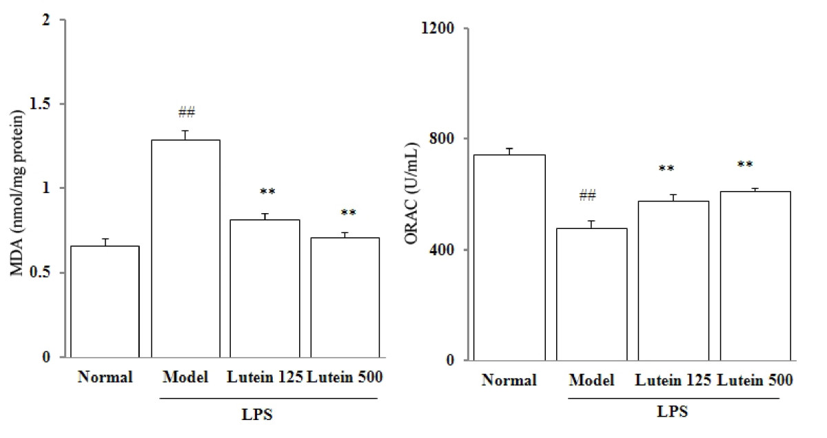 https://static-content.springer.com/image/art%3A10.1186%2F1749-8546-6-38/MediaObjects/13020_2011_Article_141_Fig3_HTML.jpg