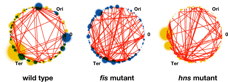 https://static-content.springer.com/image/art%3A10.1186%2F1752-0509-2-18/MediaObjects/12918_2007_Article_175_Fig5_HTML.jpg