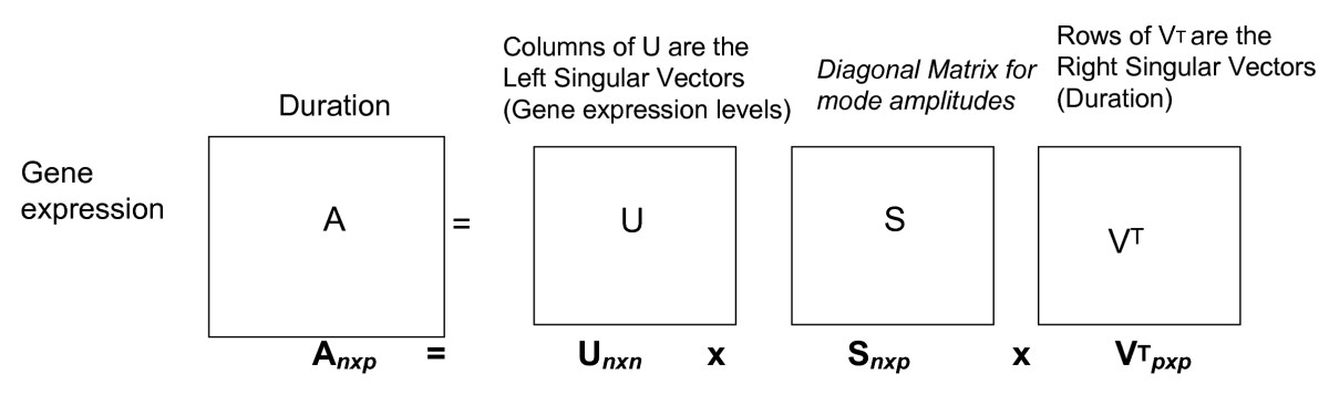 https://static-content.springer.com/image/art%3A10.1186%2F1752-0509-2-63/MediaObjects/12918_2008_Article_220_Fig1_HTML.jpg